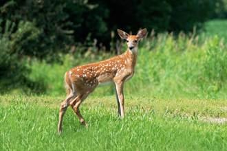 非法獵殺數百頭鹿! 法院竟判他每月至少看一次「這部片」