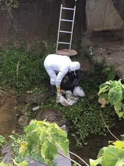 嘉義野溪驚見染禽流感雞屍 警方全力追查來源中