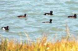 墾丁新年鳥類調查 共計129種