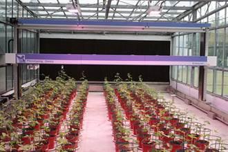自動化分析農業育種走向精準化