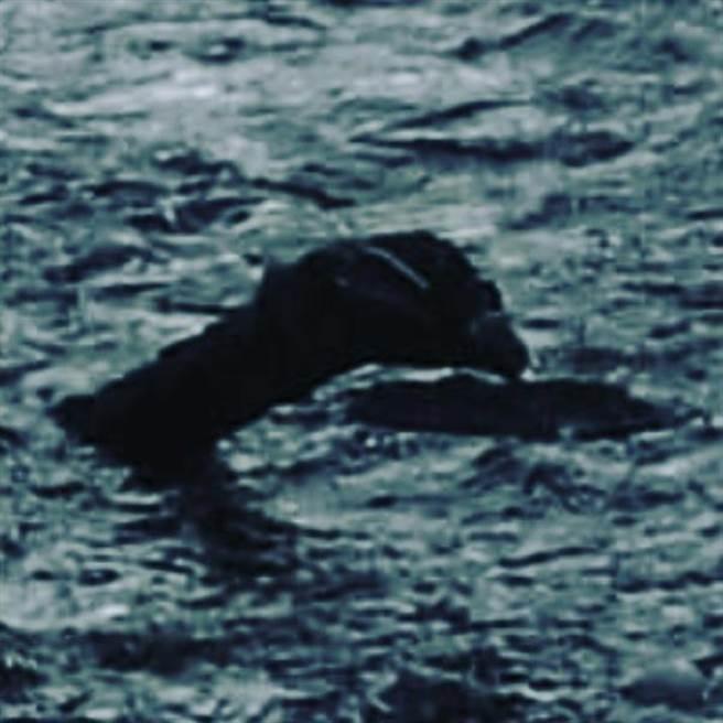 菲利浦斯拍到的尼斯湖水怪竟有「鳥嘴」(圖/翻攝自《太陽報》)