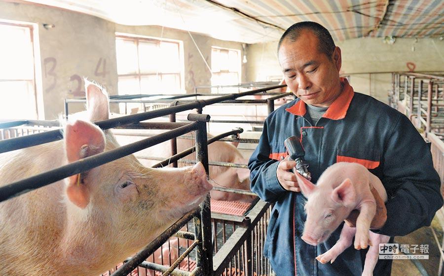 石家莊某農舍員工為小豬仔注射防疫疫苗。(新華社資料照片)