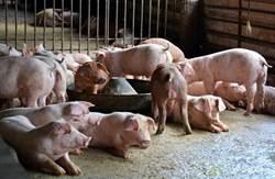出回國都沒收到警告!葉毓蘭轟:非洲豬瘟防疫有漏洞