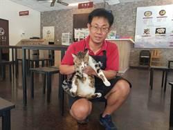 味道食堂友善店貓 人貓互動趣味多