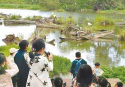 池畔賞鳥 木作童玩 羅東林場親子遊