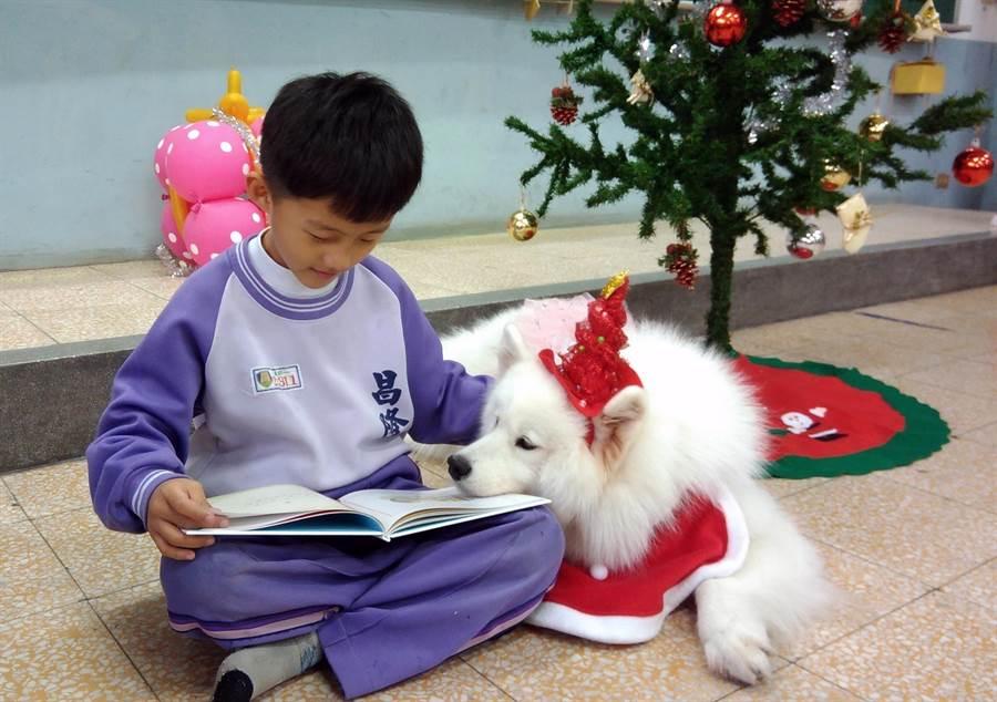 身心障礙學童在狗醫生Caesar陪伴下,安靜看書不吵鬧。(吳岳修攝)