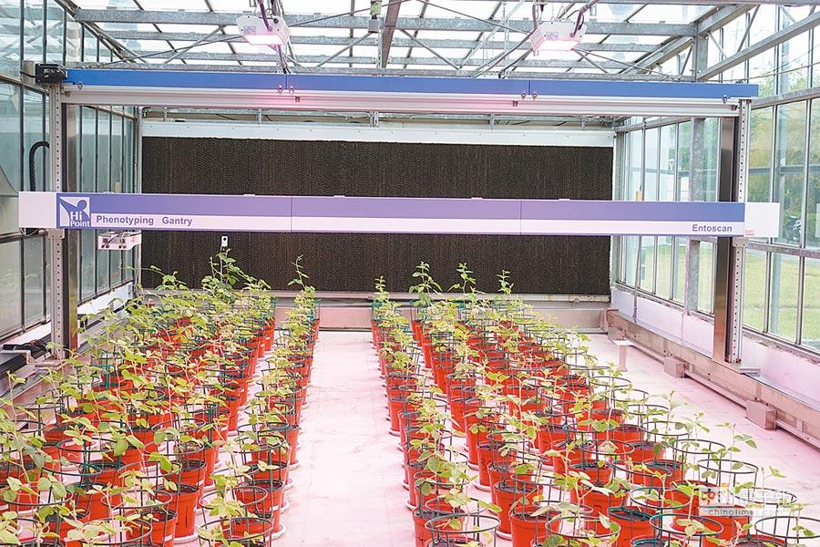 農試所在溫室建置荷蘭企業的大豆掃描分析系統,朝精準化育種方向邁進。(農試所提供)