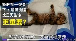 桃園動保處又出包?志工哭訴活活餓死幼貓