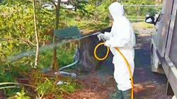 中埔野溪遭棄雞屍 驗出禽流感