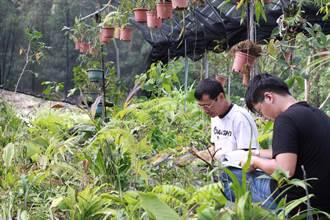 國家植物園方舟啟動 為特稀有植物保存命脈