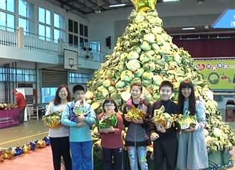 韓流效應救菜農! 校園堆起「高麗菜聖誕樹」