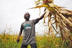 奈及利亞翻轉農業