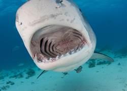 潛水遇鯊魚攻擊 男生殖器遭啃走身亡