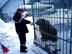 她炫耀「會餵熊」把手伸籠內!卻慘被棕熊當大餐生吞