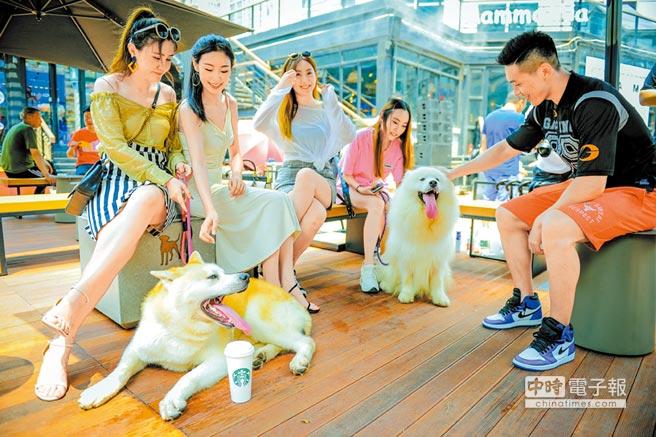 90後更願意在寵物花更多心思。圖為天津市民在大悅城帶寵物來逛街休閒。(中新社資料照片)