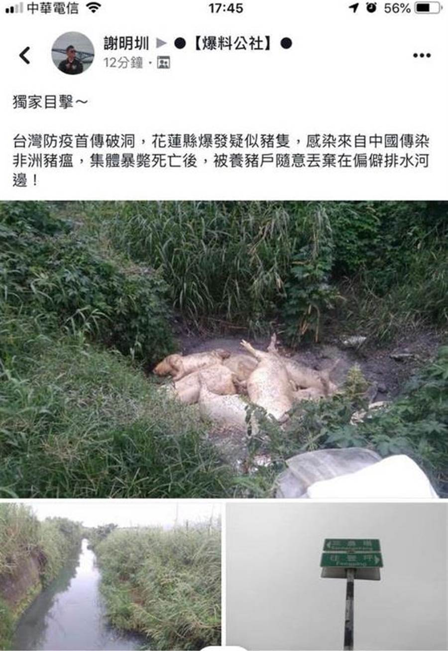 網友爆料花蓮壽豐鄉有非洲豬瘟死豬遭丟棄。(翻攝自臉書社團「爆料公社」)
