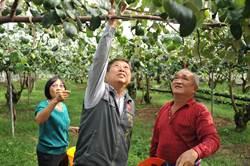 暖冬效應 國姓蜜棗草莓產期延後質佳