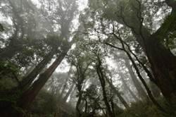 影》台東林管處深山特遣紀實影片 揭露百株紅檜巨木群