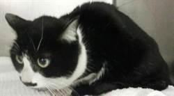 靜岡的家貓走失逾1個月 竟在170公里外名古屋被尋獲