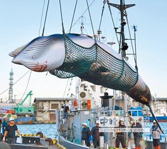 鯨豚浩劫 日2019年7月重啟商業捕鯨