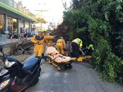 廠商施工疑挖到路樹頭 樹倒壓傷兩騎士