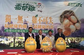 金農興「香草雞蛋」上市 飼養香藥草取代抗生素