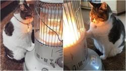 抱緊處理!超怕冷取暖貓  誰也別想拆散我們