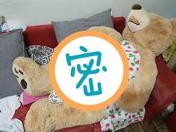 好市多這隻熊 讓她們愛慘了「尤其是去大便時!」