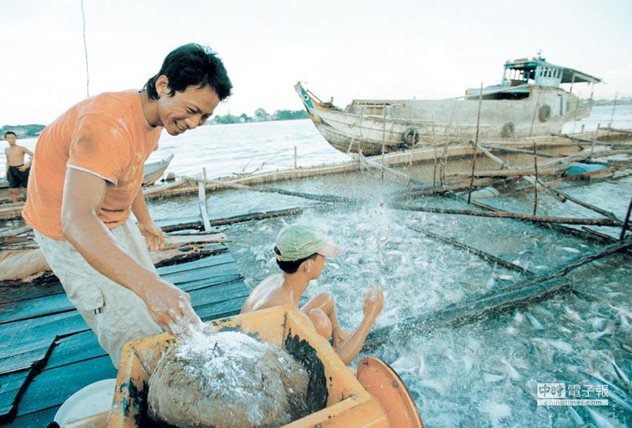鯰魚也成貿易戰苦主圖╱美聯社