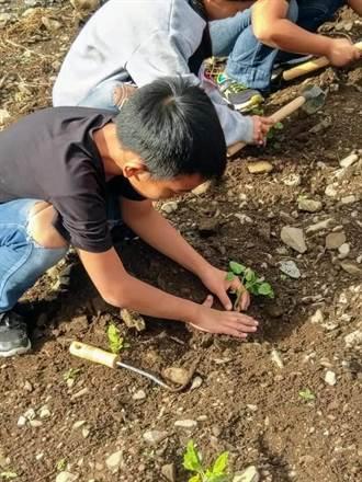 紅藜先生當老師 帶領家鄉小朋友認識傳統作物
