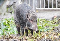 豬隊友快來 動物園生肖營報名