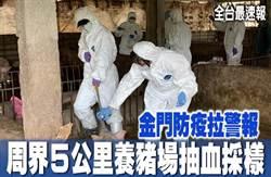《全台最速報》金門防疫拉警報 周界5公里養豬場抽血採樣