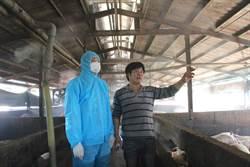 花蓮市長視察養豬場 豬農:我們比任何人都怕豬瘟
