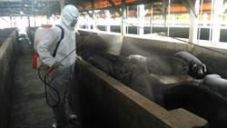 中央點名地方防疫慢半拍 新北:去年11月就成立非洲豬瘟應變中心