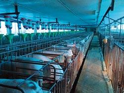 優尼克消毒技術 為非洲豬瘟防疫築牆