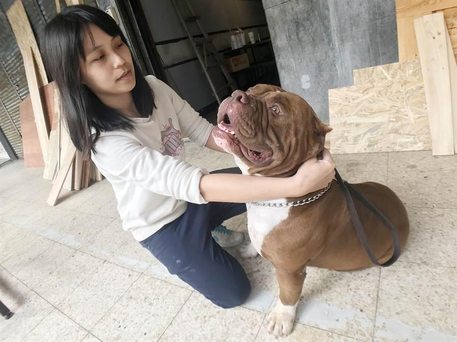 Hooli體重超過50公斤,但非常聽話,身材纖細的主人陳筱婷帶出門完全不怕牠暴衝。(林宏聰攝)
