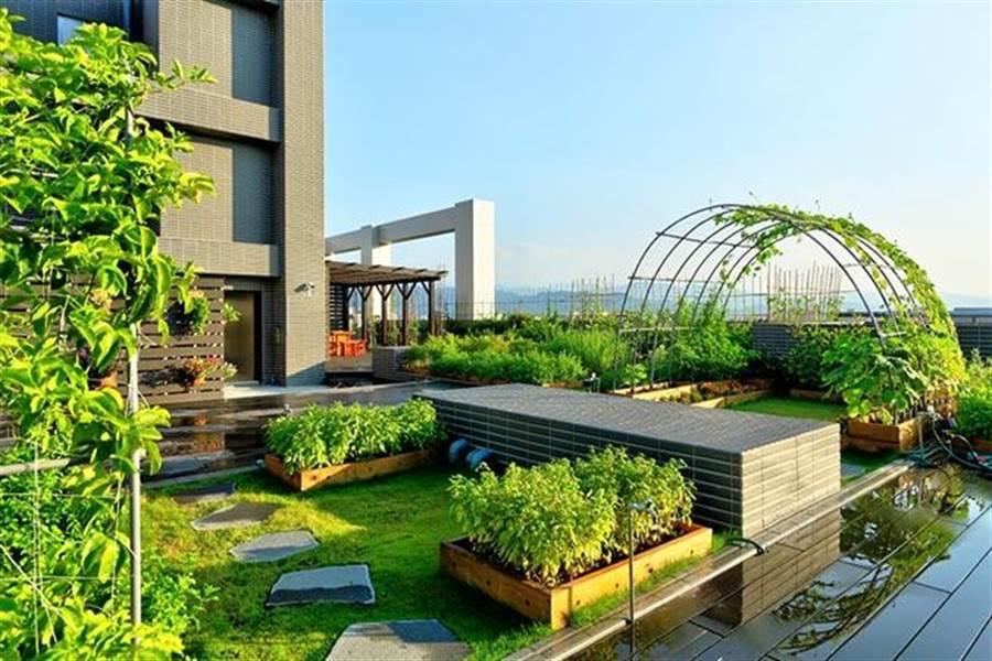 新板巨星的空中花園。(圖/新板巨星提供)