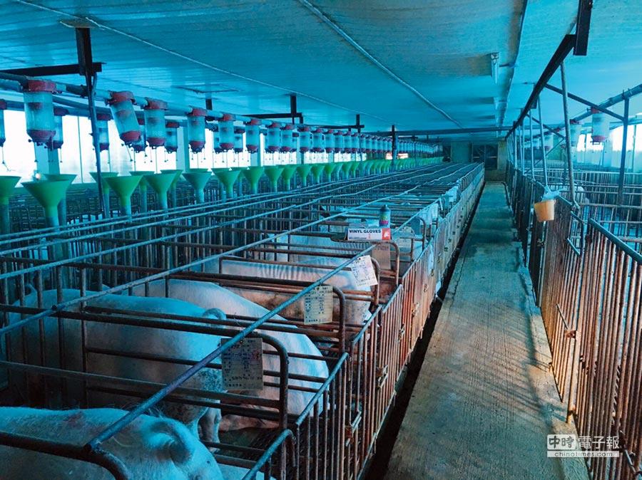 優尼克在仔豬場飲用水及環境中添加UC氣態二氧化氯進行殺菌防疫,明顯改善仔豬下痢死亡現象。圖/優尼克提供