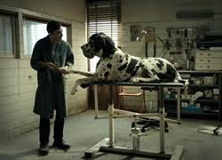 男主角奪影帝不稀奇 狗演員也奪「坎城金棕櫚獎」