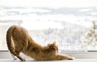 失眠苦翻天 學貓伸展助放鬆