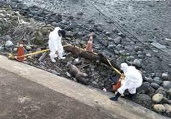 台中丽水渔港惊见死猪 初判死亡逾1个月