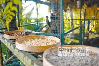精準農業 無人機豐收雨林咖啡