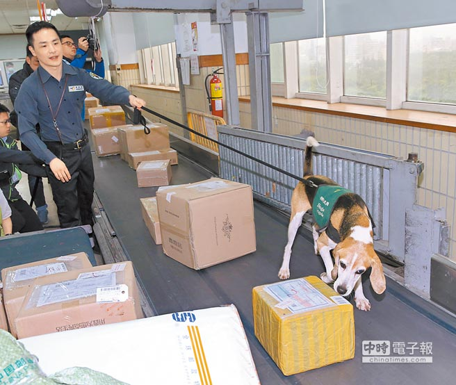為防堵大陸非洲豬瘟疫情傳入,中華郵政公司將來自疫區的郵件集中管理且隔離搬運,透過檢疫犬協助找尋是否有肉製品。(陳君瑋攝)
