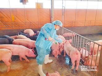 1週內「禁廚餘養豬」 業者轟:政策決策馬虎