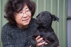 用愛救援百餘隻流浪狗 張帆要訓練療癒陪伴犬助弱勢