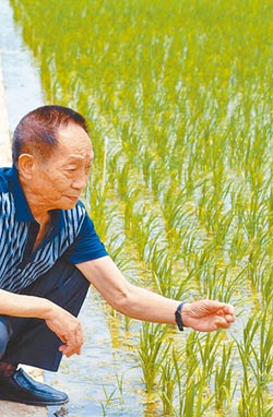華為進軍農業 智慧培育海水稻