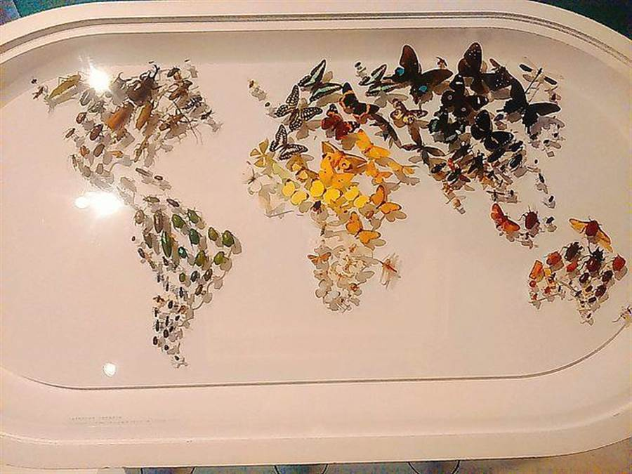 由美麗蝴蝶譜出的「世界五大洲」。