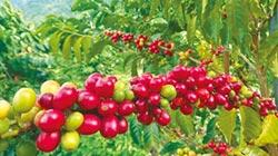 雲林水果銷陸 農民有賺頭