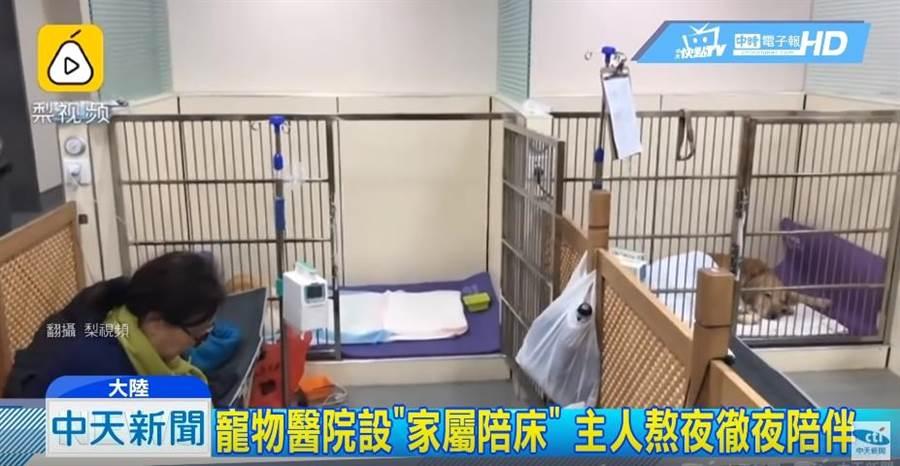 寵物醫院設家屬陪床