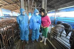 嚴查廚餘蒸煮 彰化新增41場廚餘養豬戶轉型餵食飼料